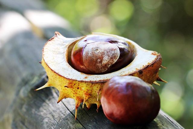 Zehn tolle Ideen mit Kastanien für einen sinnlichen Herbst