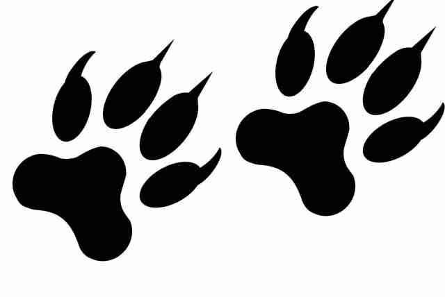 Paw Patrol - Tierischer Spaß im Kindergarten (3 bis 5 Jahre) (PDF)